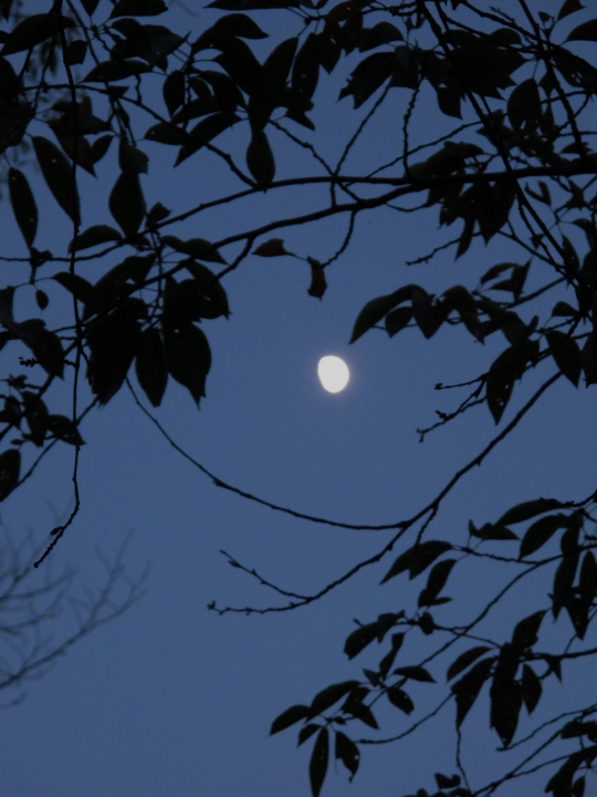 Moon_from_leaves_120925_G12.jpg