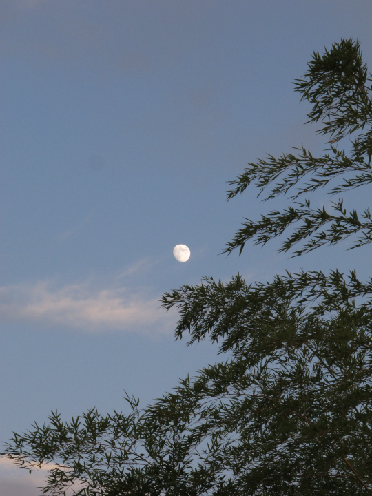 Moon_from_leaves_120927_G12_5.jpg