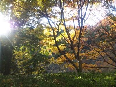 fc2blog_20121120192028061.jpg