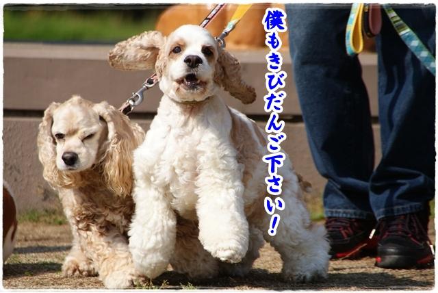 20120527_013.jpg