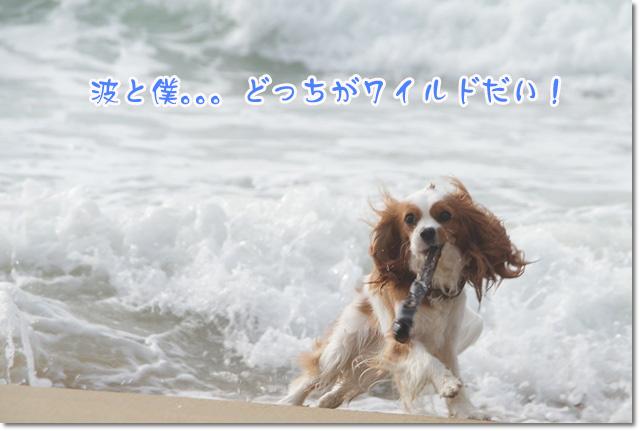 20120628_025.jpg