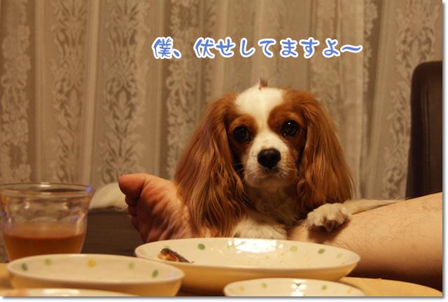 20120711_001.jpg