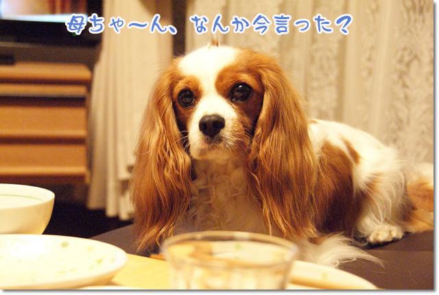 20120711_004.jpg