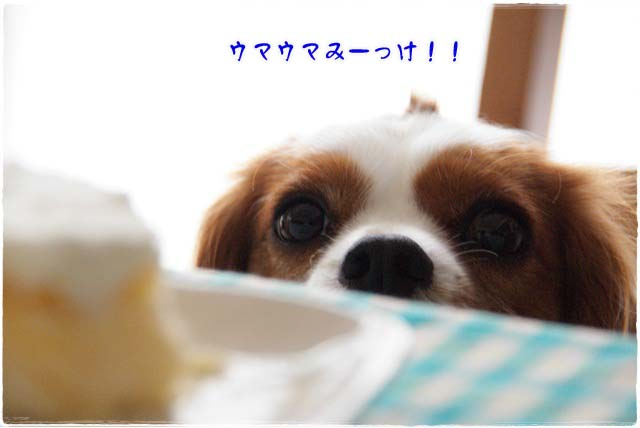 20120808_001.jpg