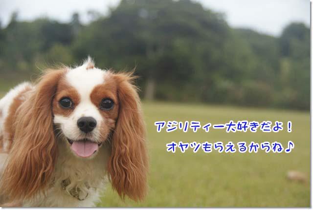 20120928_025.jpg