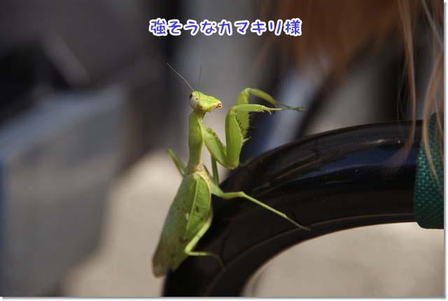20121015_015.jpg
