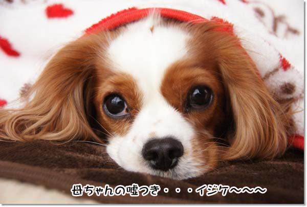 20121206_013_20121206170658.jpg