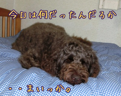 2013_0406_05.jpg