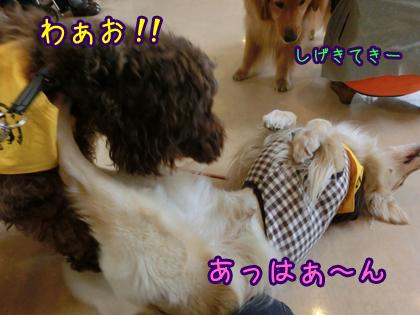 2013_0523_03.jpg