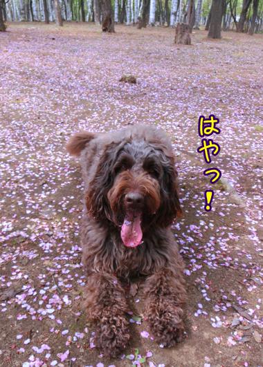 2013_0528_011.jpg