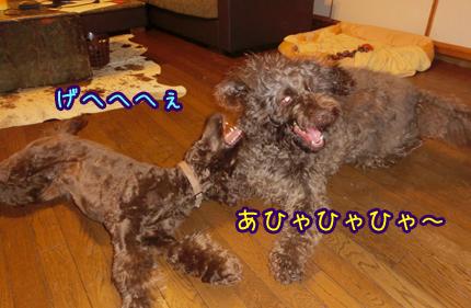 2013_0604_02.jpg