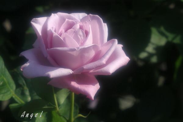 グレイパール(201205191514)