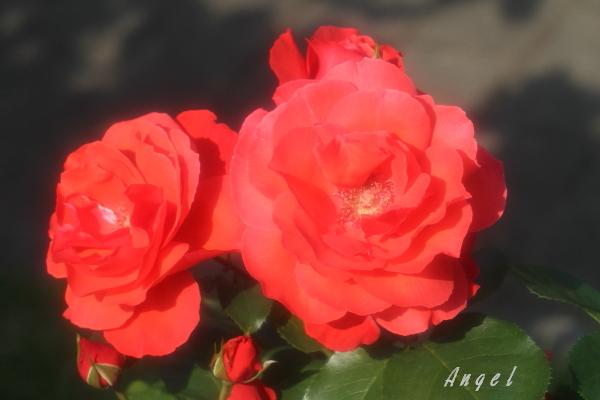 花籠(201205191474)