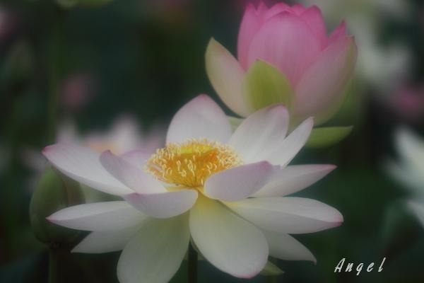 甲斐姫(201207150697)