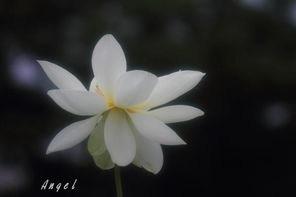 王子蓮(201207150739)