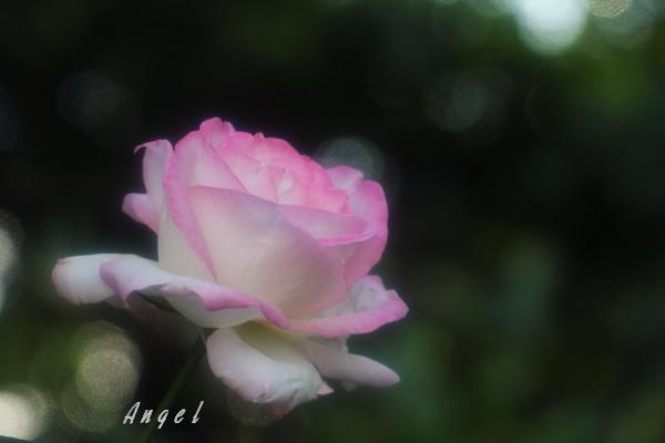 プリンセス ドゥ モナコ(201210132105)