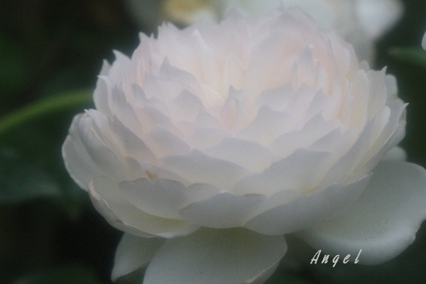ポレロ(201210142647)