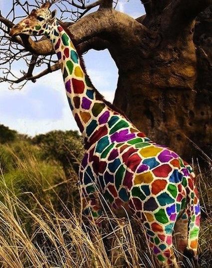 rainbow-giraffe_20130530183445.jpg