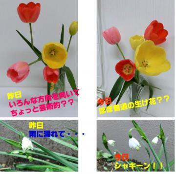 20120506-01.jpg