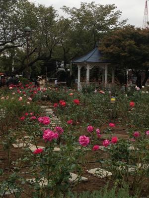 イギリス館の薔薇園
