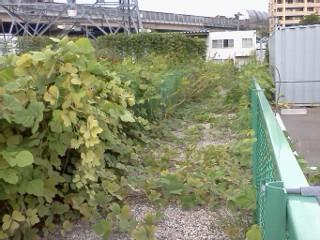 arima-higashiyamada5.jpg