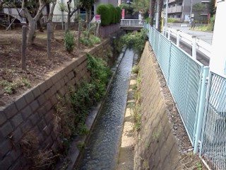 azaminominamishiryuu3.jpg