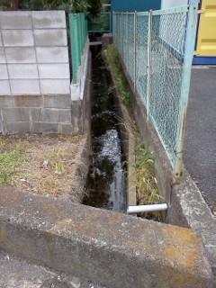 edashiryuu6.jpg