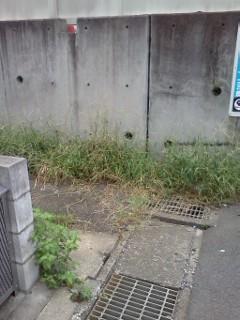 hisasue-nakaharagawa3.jpg