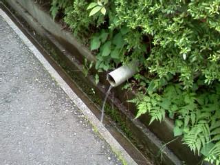 kokugakuinn-mori-wakimizu1.jpg