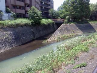 nunokawa-gouryuu.jpg