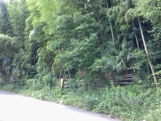 nunokawa7.jpg