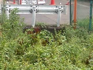 shibokuchi-bunnryuu-kaikyo.jpg