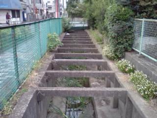 shibukawa-usui7.jpg