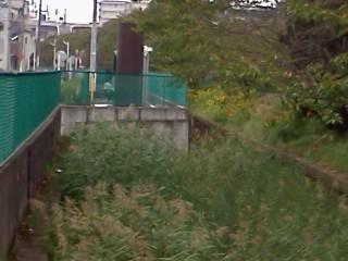 shibukawa14.jpg