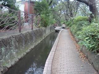 shibukawa3.jpg