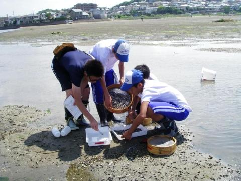 干潟生物調査・砂地