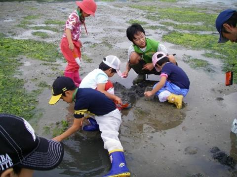 ③干潟の生き物観察IMGP0385a0
