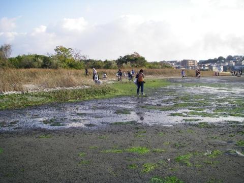 ⑦干潟の掃除IMGP0418
