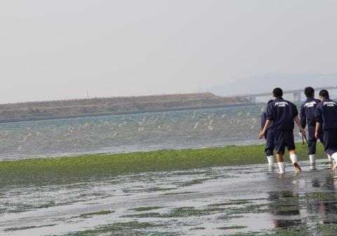 ③干潟の生き物観察1(干潟を舞うシギの群れ)IMG_0070a11L