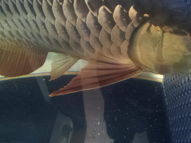 ジャイ子鰭2