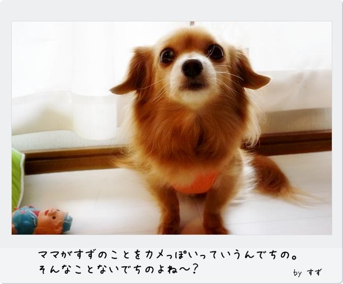 DSC059851.jpg