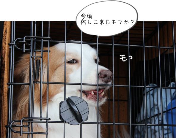 IMG_06041.jpg