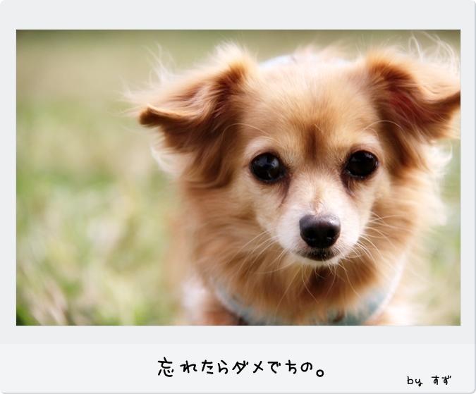 IMG_09311.jpg