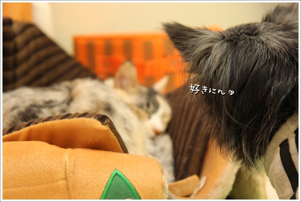 IMG_22061.jpg