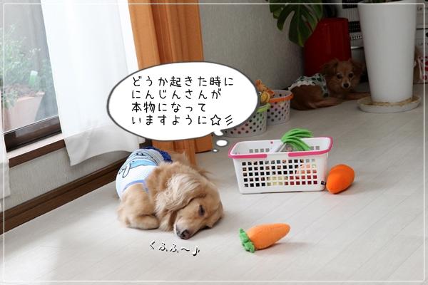 IMG_52921.jpg