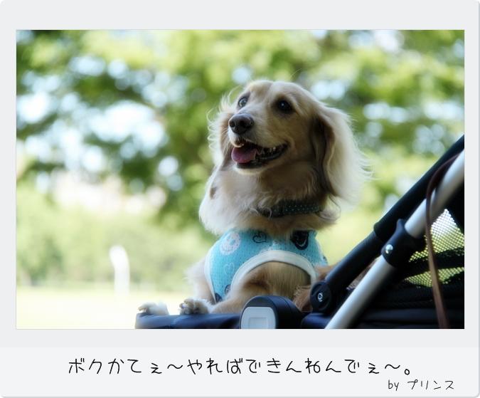 IMG_75681.jpg