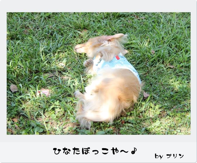 IMG_77041.jpg