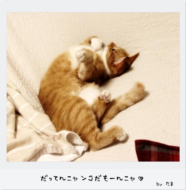 IMG_81421.jpg