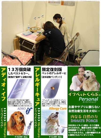 cats34567.jpg