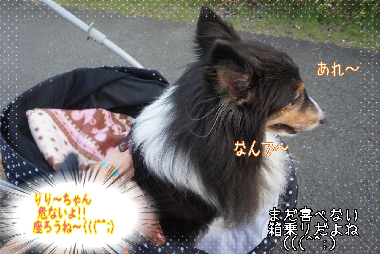 2014-10-09-19-48-45_deco.jpg